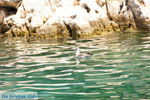 Gaios | Eiland Paxos (Paxi) bij Corfu | De Griekse Gids | Foto 010 - Foto van De Griekse Gids